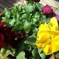 fleurs 005a