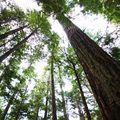 la forêt du Grand Ours