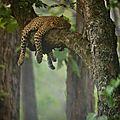 leopard6_1034464715_n