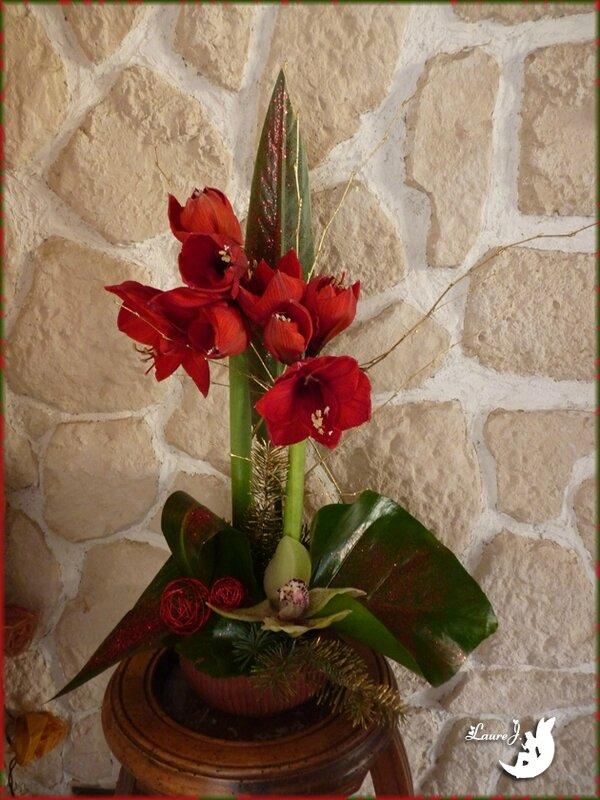 Amaryllis orchid e mon jardin du bonheur for Amaryllis de noel