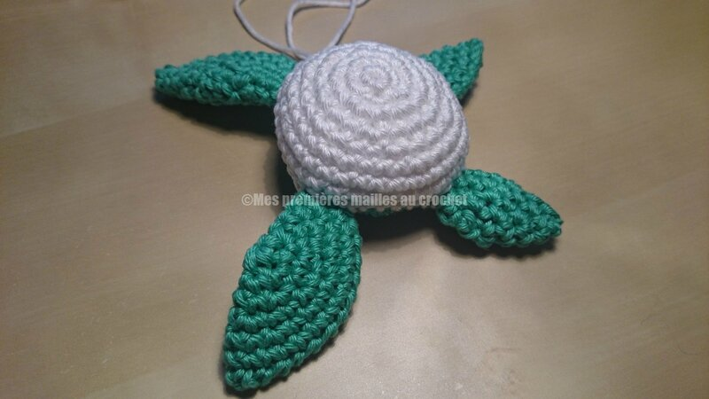 tortue 03