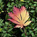 2011_10_26-POM-P1050671