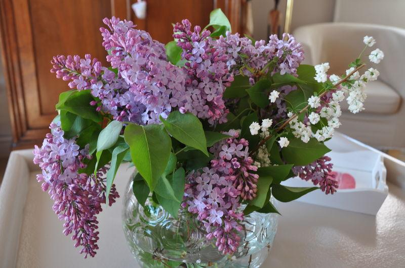 Parfum d 39 enfance de dakar aux chemins de saint jacques - Au jardin de mon pere les lilas sont fleuris ...