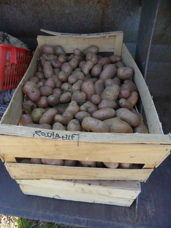 14-pommes de terre (21)