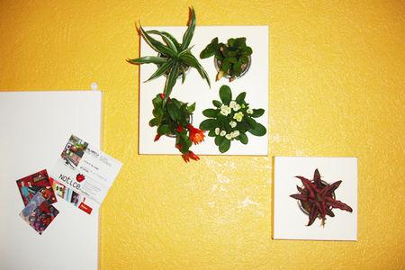 mur_plantes