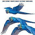 Oiseaux du brésil