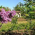 1 Le printemps