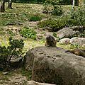 05 Les Marmottes (8)