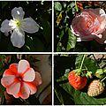 Open-Live-Writer/8faf622b47eb_FFD5/fleurs 2_thumb