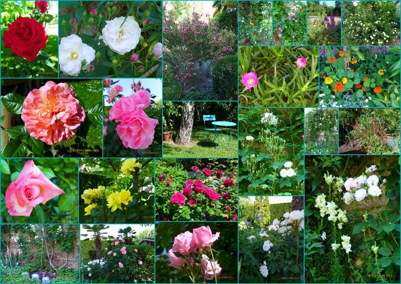 mon jardin aujourd'hui