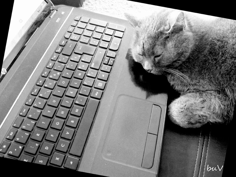 chat geek black and white