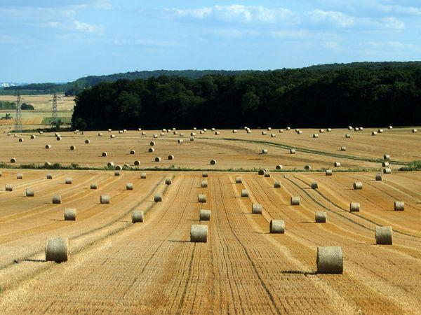 été moisson champs photo rouleaux paille blé valérie albertosi