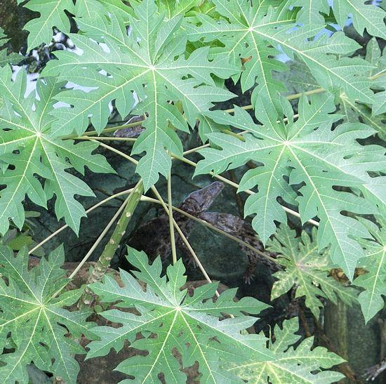 Plante carnivore val rie del photographies for Plante carnivore 01
