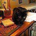 - aujourd'hui pluie - petit chat et ordinateur-