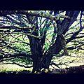 ARTZAMENDI, un arbre (64)