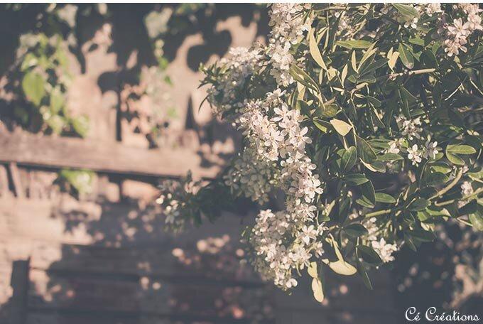fleurs_jardin-7