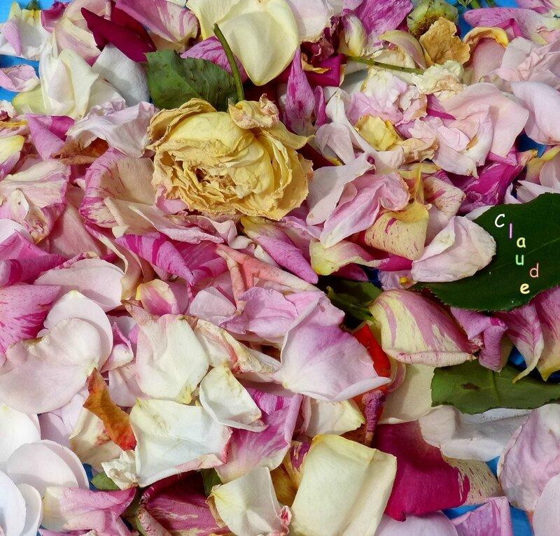 tites fleurs fânées