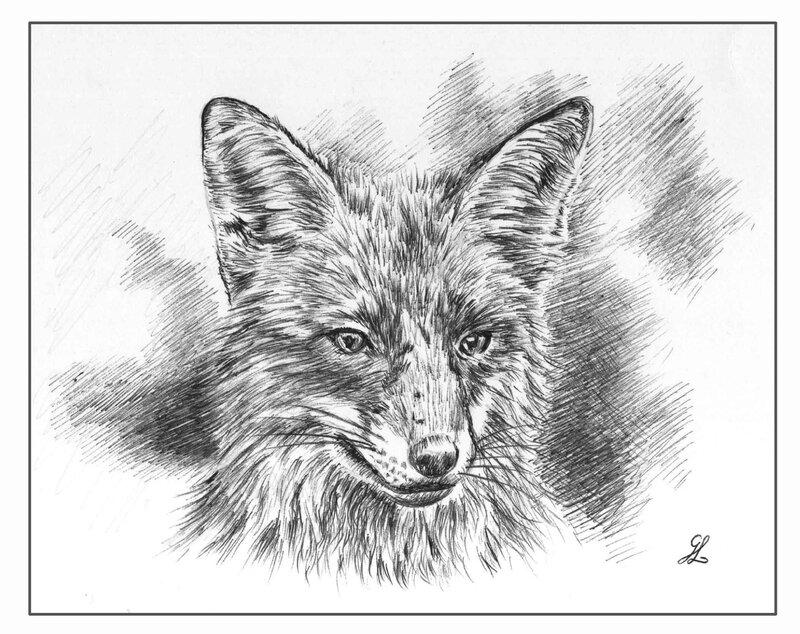 Dessin renard prédateur stylo bille Ghislaine Letourneur