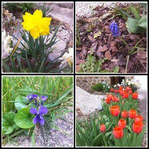 fleurs_26_03_2011