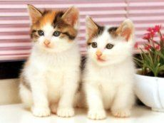 deux_chatons_a12_t