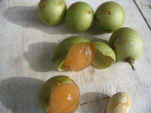 fruits_022