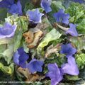 Ceasar salad aux capanules