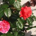 fleurs 077