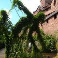 Jardin médiéval du haut-koenigsbourg