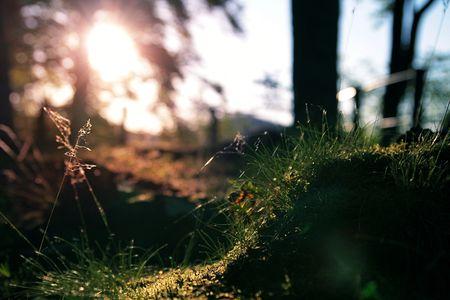 Soleil_sur_herbe