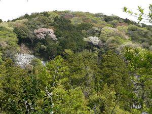 Canalblog_Tokyo03_14_Avril_2010_052
