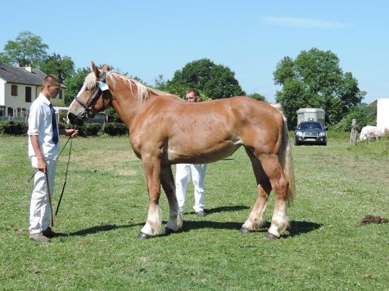 Etoile 19 - 11 Juin 2017 - Concours d'élevage local - Bernaville (80) - 4e (3 ans)