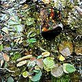 boite rouillée dans la rivière