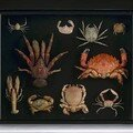 Collection of crustaceans, philippines