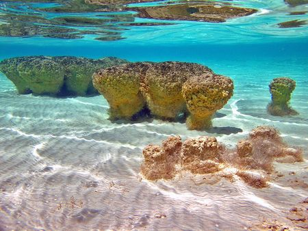 stromatolites_shark_bay