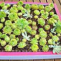 Tableau succulentes