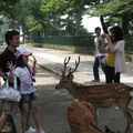 Bambi in the city of Nara