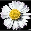 fleurs sur fond noir (3)