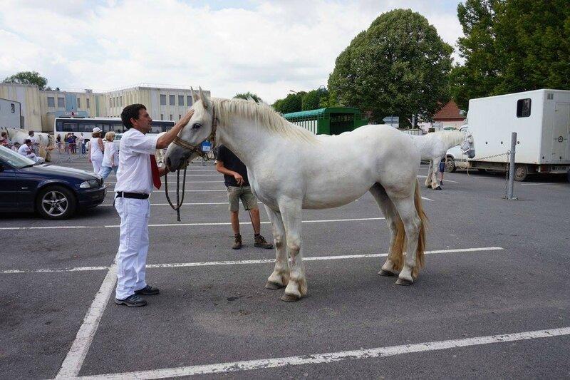 Flika de Souastre - 17 Juin 2017 - Concours élevage local - St Pol sur Ternoise (62) - 3e (2 ans)