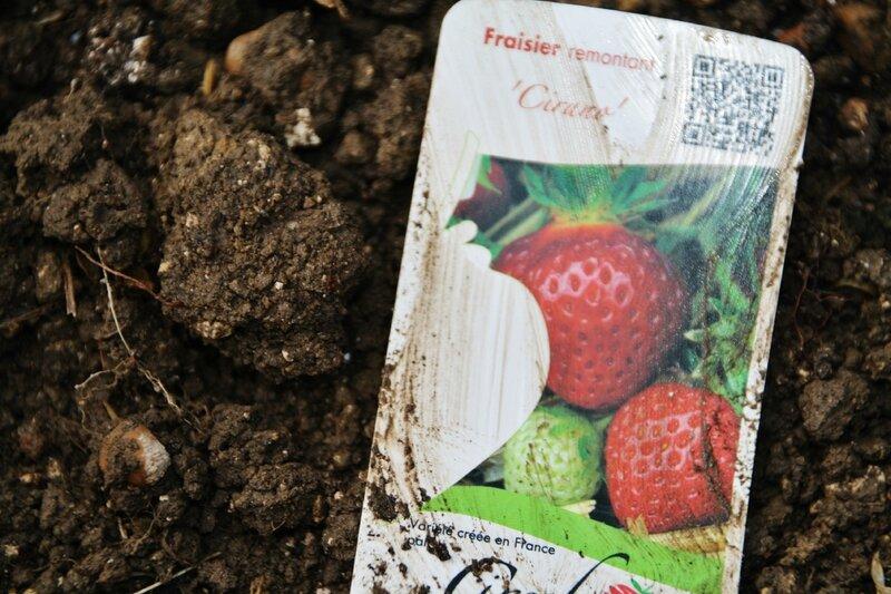 trousse fraises 008