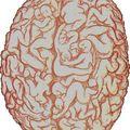 L'addiction, une perte de plasticité du cerveau ?