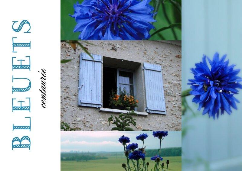 bleuets centaurées Boisemont val d'Oise valerie albertosi