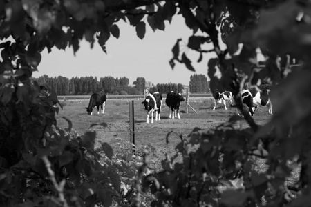 Campagne_4