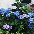 1-Fleurs de Léon 280617
