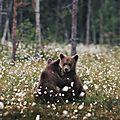 Câlin d'ours avec caro38, 5e inscrite