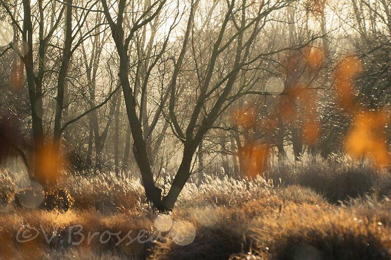 arbres-hiver02