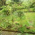 réaménagement d'un petit coin de jardin