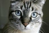 3694783-tabby-cat-staring-front