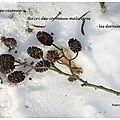 Corbeaux en hiver (crows in winter)