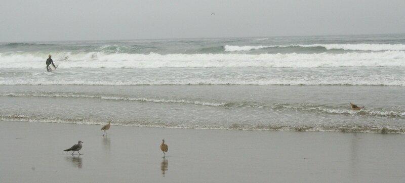 Californie 1 (561)