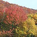 forêt_modifié-1